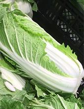 カット野菜白菜